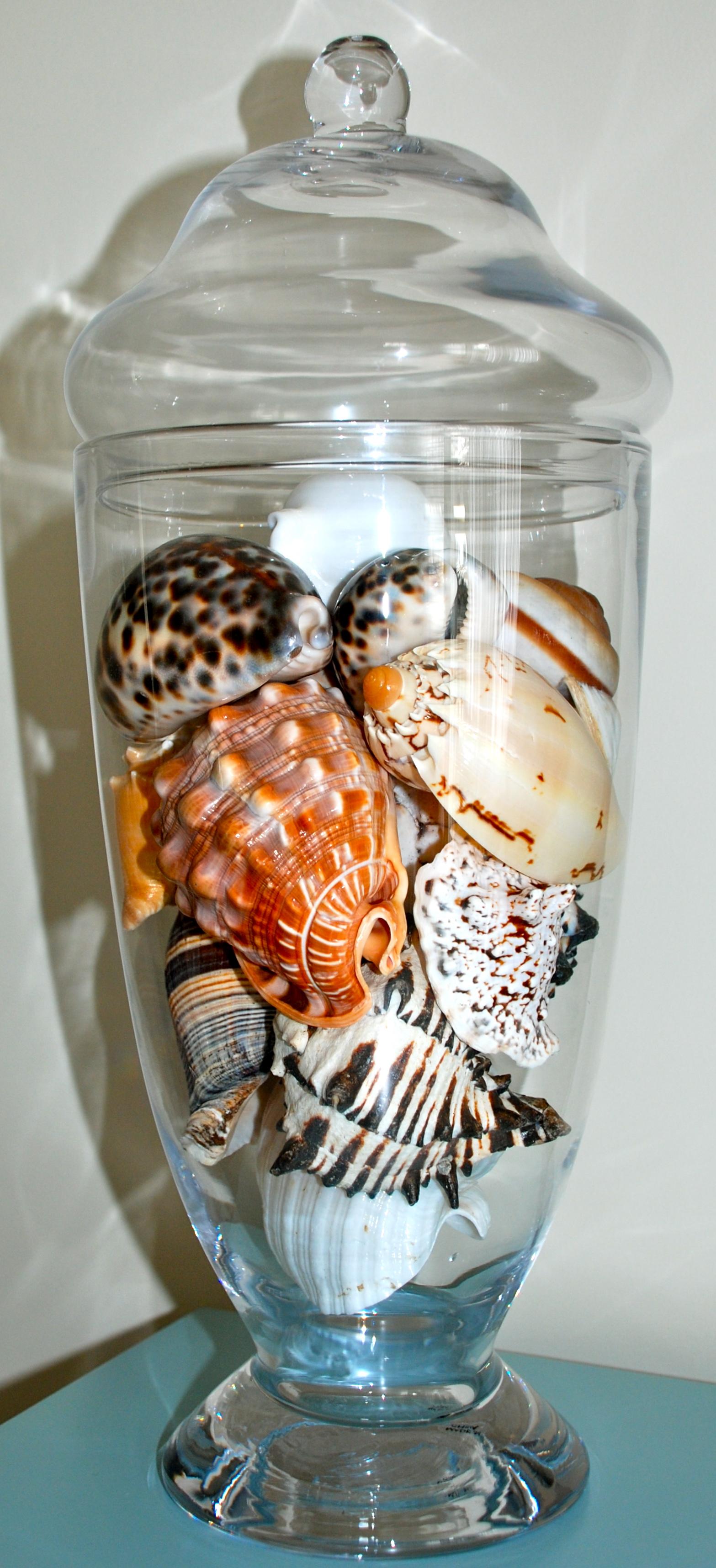 Seashells Amp Vases Saltwater Living
